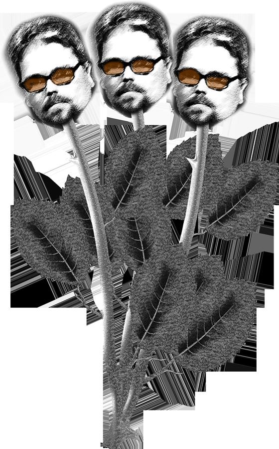 rose-reil